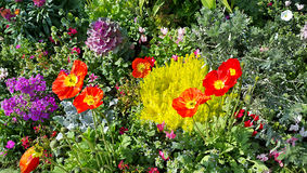 Nature background of colorful bright flowerbed Stock Photography