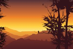 Nature background. Colorful sunset in wild valley, mountain with trees. Stock Image