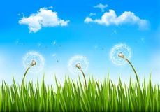 Nature background with dandelions. Royalty Free Stock Photos