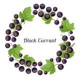 Nature background design with black currants. Stock Photo