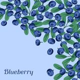 Nature background design with blueberries. Stock Photos