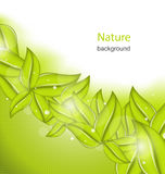 Nature Background with Eco Green Leaves Stock Photography