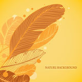 Nature background with feathers elements. Feathers Background. Nature background with feathers elements vector illustration