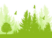 Nature background with firs Royalty Free Stock Image