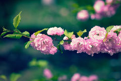 Nature background with flowers Stock Photos