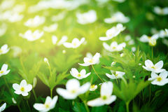 Nature background with flowers Stock Photography