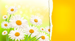 Nature background with fresh daisy. And ripped paper illustration vector illustration