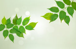 Nature background with fresh green leaves. Royalty Free Stock Photos