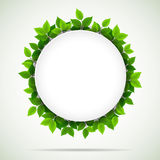 Nature background with fresh green leaves Stock Photo