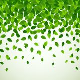 Nature background with fresh green leaves. Illustration of Nature background with fresh green leaves stock illustration