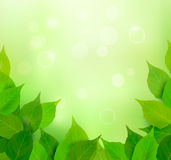 Nature background with fresh green leaves  Vector Stock Image