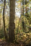 Nature background, golden hour in the fall Forest stock photos