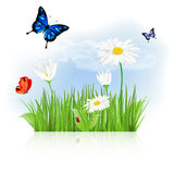 Nature background with grass, flowers and butterflies Royalty Free Stock Photography