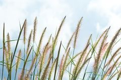 Nature background with grass. Vintage soft light tone Stock Photography