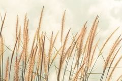 Nature background with grass. Vintage soft light tone Royalty Free Stock Images