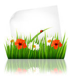 Nature background with grass and a sheet of paper. Royalty Free Stock Photos