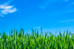 Nature background, grass and sky. 2015 stock photos
