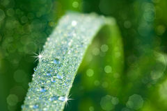 Nature Background with Grass and waterdrops Royalty Free Stock Images