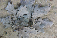 Nature background gray colors, texture, old leaves on loam, soil. Background nature gray colors, texture, old leaves on loam, soil Stock Images