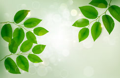 Nature background with green fresh leaves Stock Photos