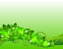 Nature background with green fresh leaves Stock Photography