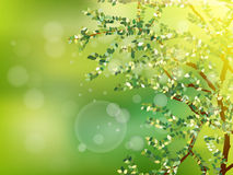 Nature background with green fresh leaves. EPS 10 Stock Photography