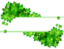 Nature background with green fresh leaves Royalty Free Stock Image