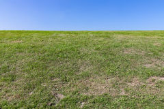 Nature background, green grass with blue sky Royalty Free Stock Photography