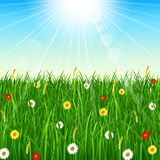Nature background with green grass, blue sky and bright sun. Illustration of Nature background with green grass, blue sky and bright sun Royalty Free Stock Photo