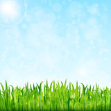 Nature background with green grass and blue sky vector.  Stock Photos