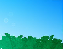 Nature background with green grass and blue sky Royalty Free Stock Photography