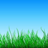 Nature background with green grass and blue sky Stock Images