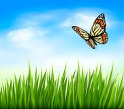 Nature background with green grass and butterfly a Royalty Free Stock Photography