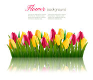 Nature background with green grass and colorful flowers. Stock Photography