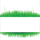 Nature background with green grass 02 Stock Image