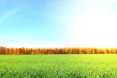 Nature background. Green grass field against a blue sky with wispy white cloud. S, toned Stock Photo