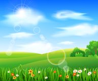 Nature background with green grass. And flowers and blue sky Royalty Free Stock Photography
