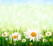 Nature background with green grass and flowers Royalty Free Stock Image