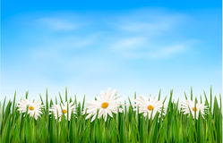 Nature background with green grass and flowers and Royalty Free Stock Photos
