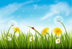 Nature background with green grass, flowers and a butterfly. Vector Stock Photos