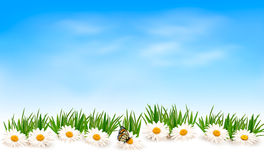 Nature background with green grass and flowers and Royalty Free Stock Photography