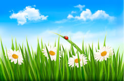 Nature background with green grass Royalty Free Stock Photo