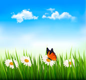 Nature background with green grass, flowers and a butterfly.  Stock Image