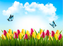 Nature background with green grass, flowers and a butterfly. Royalty Free Stock Photos