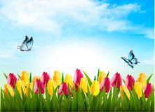 Nature background with green grass, flowers and a butterfly. Stock Photo