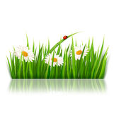 Nature background with green grass and flowers Stock Photos