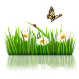 Nature background with green grass and flowers Royalty Free Stock Photography