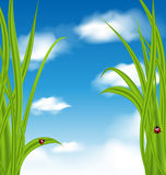 Nature background with green grass and ladybug Stock Photography