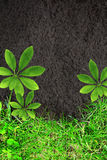 Nature background with green grass and soil Royalty Free Stock Photography