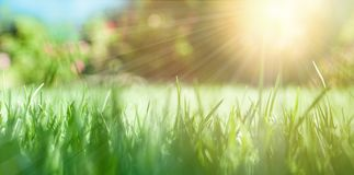 Nature background with green grass and sun.  royalty free stock image